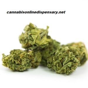 Hawaiian Marijuana Strain